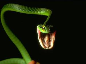 879805_com_snakes