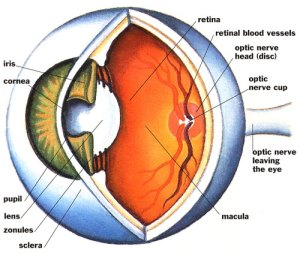 complex_eye_500
